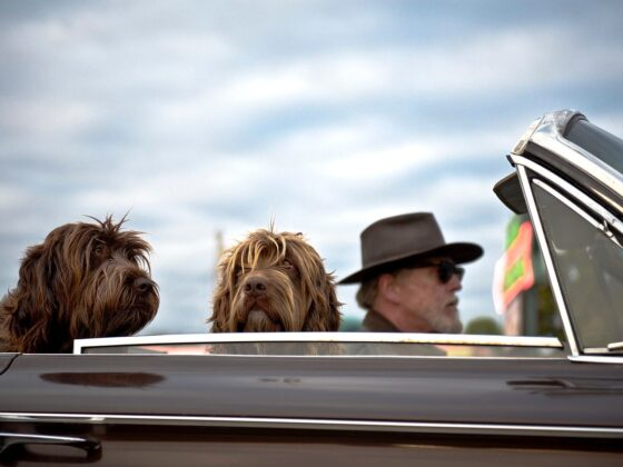 Safe Pet Travel 2020: 10 Dog Travel Tips That Works Well