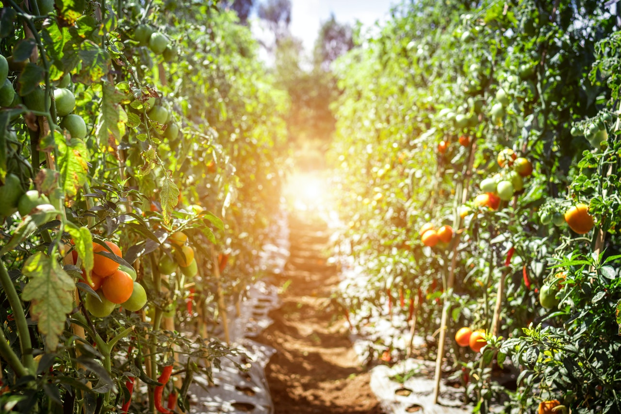 Starting a Farm in the USA: 7 Easy Things to Know Now
