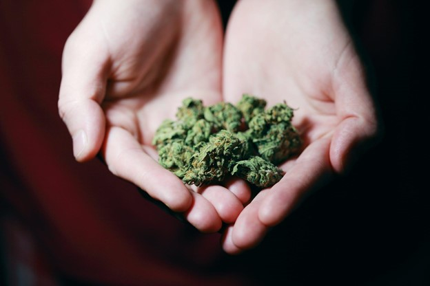 Consuming Cannabis? 6 Effective Major Laws You Should Know Now