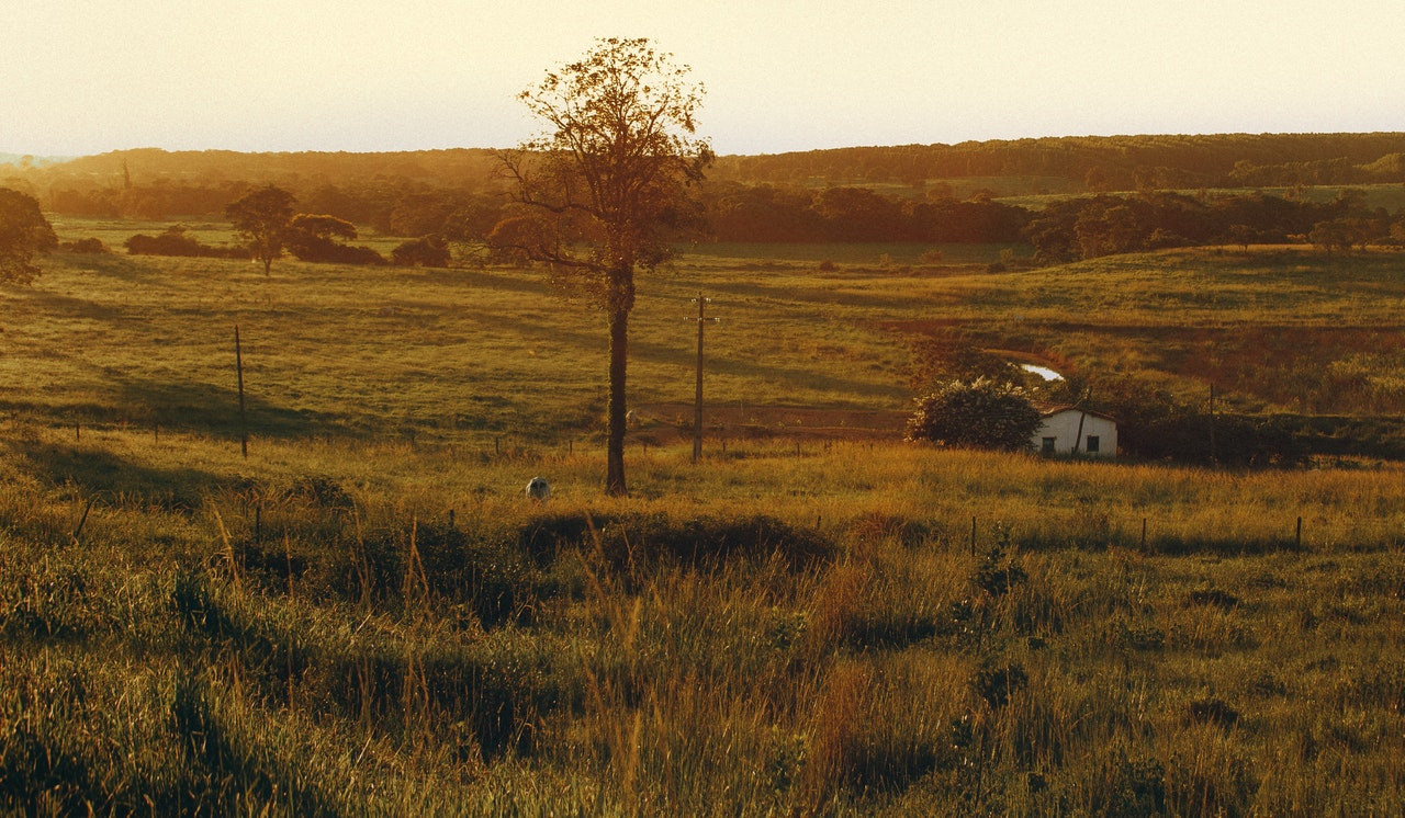 Buy Ranch in Texas: Easy Ways to Get the Best Price [2021]