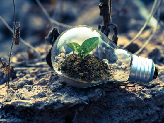 7 Easy Ways to Build a Modern Sustainable Green Business