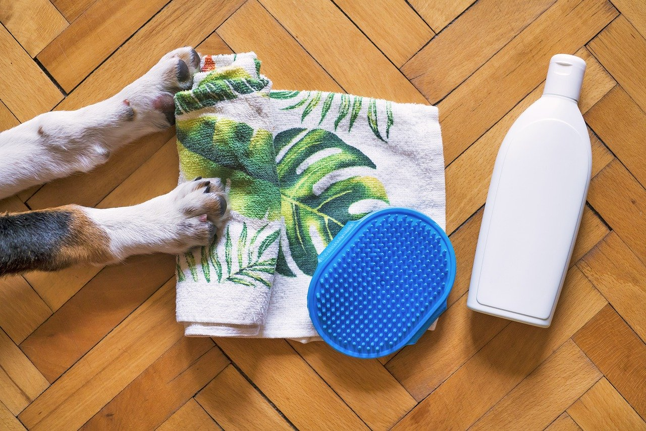 7 Tips to Start a Pet Grooming Business in Australia