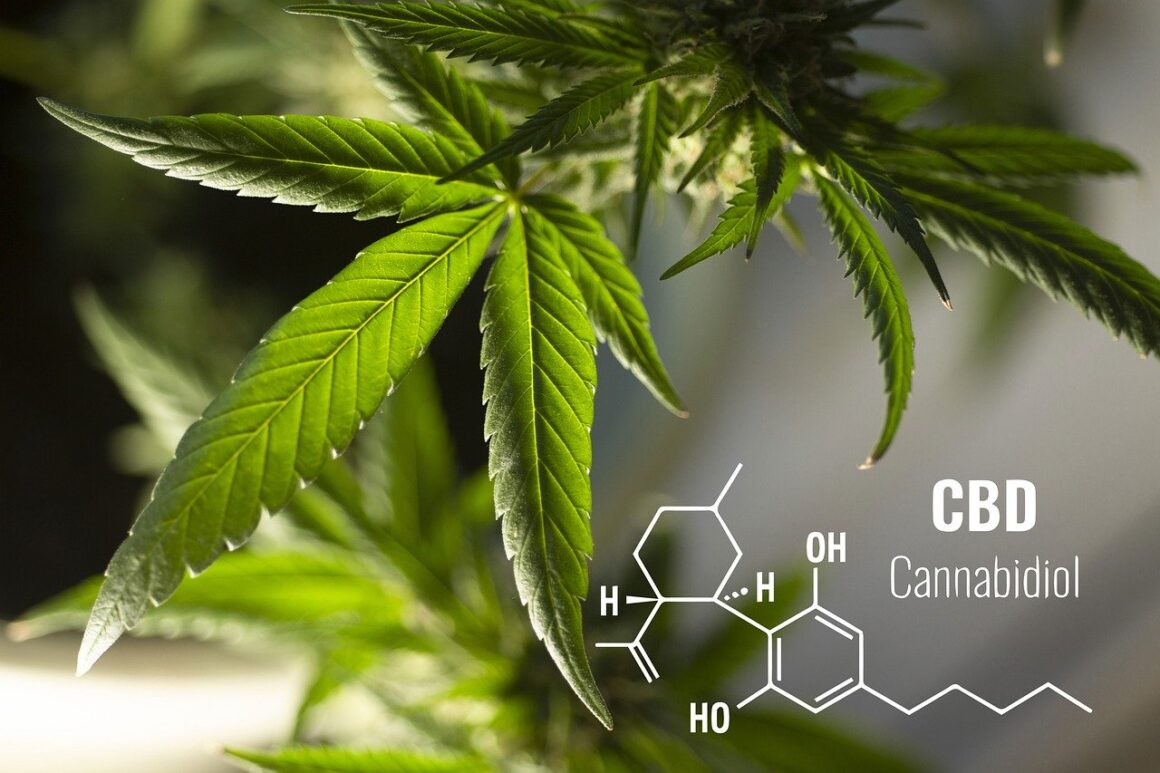 Cannabis Branding Hacks For Great Results Post COVID-19